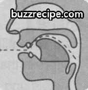 音标[z]怎么读 发音技巧 英语发音 第1张